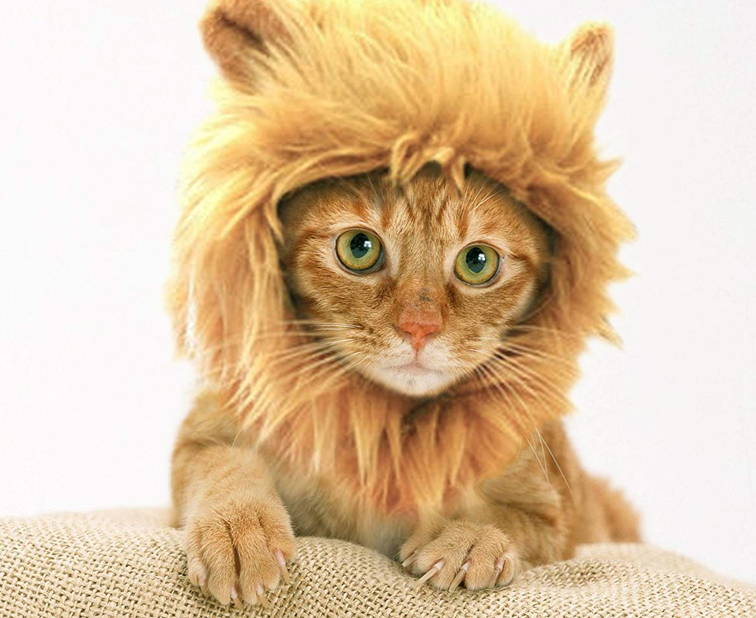 Prymal Lion Mane Dog/Cat Costume