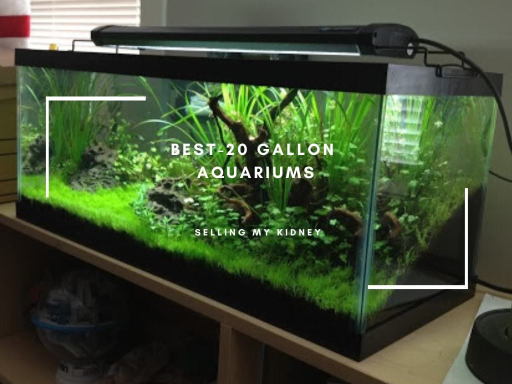 Best-20 Gallon Aquariums